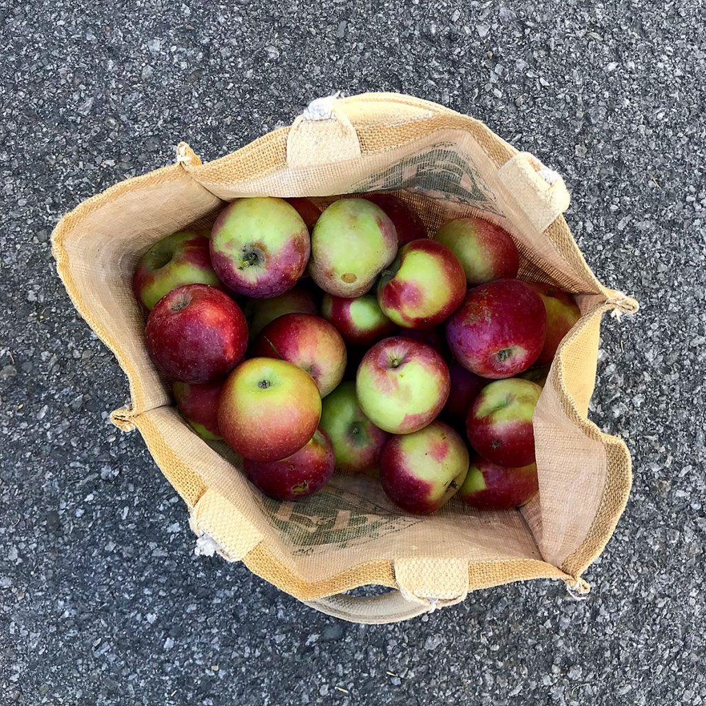 Tiny Trash Can organic apple picking montreal