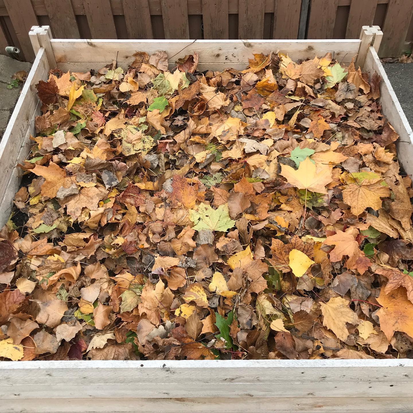 Tiny Trash Can fall leaves for garden beds