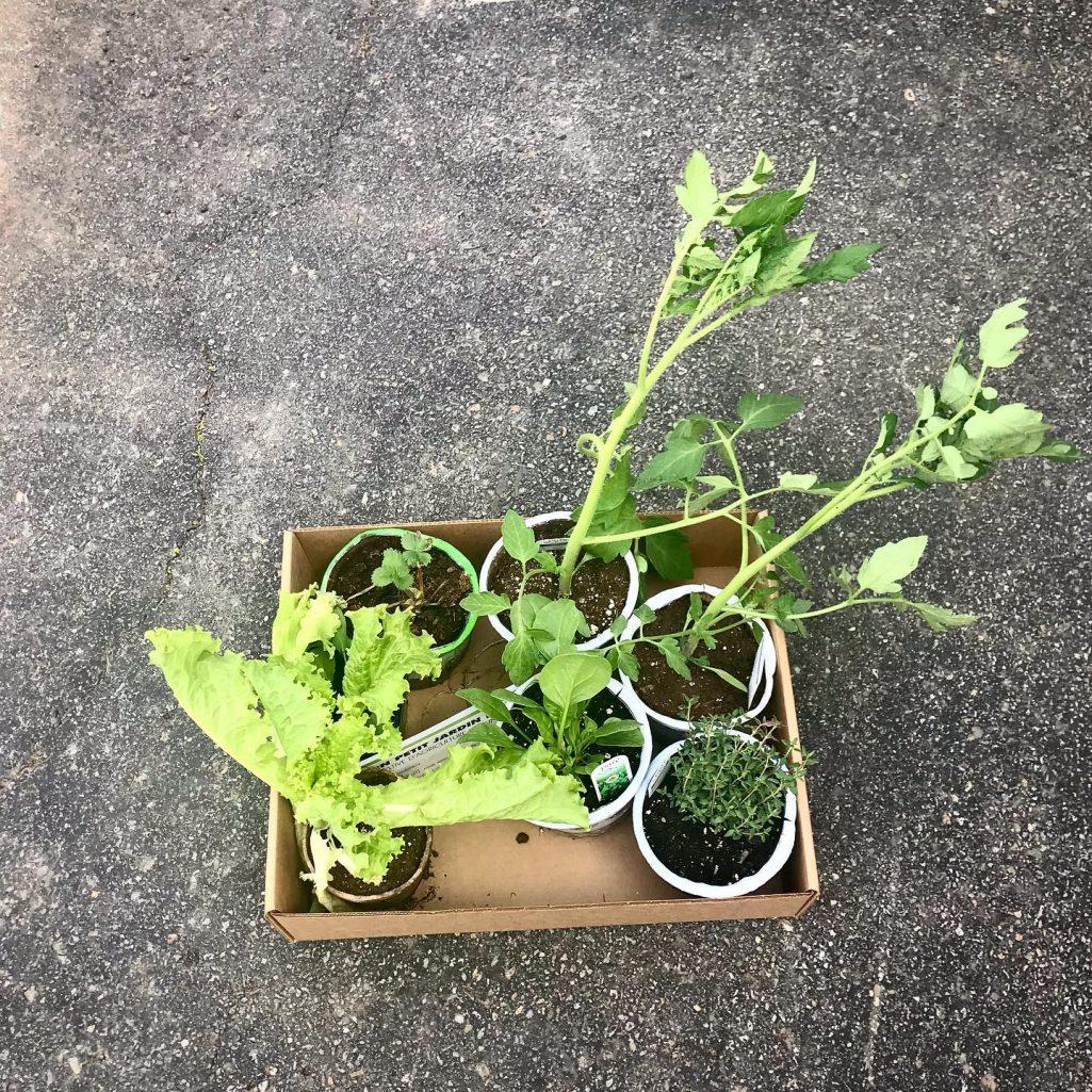 Tiny Trash Can Mon petit jardin bio
